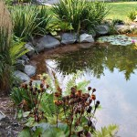 My Crazy Pond Project Part 2 A Colorful Change (Pond Dye)
