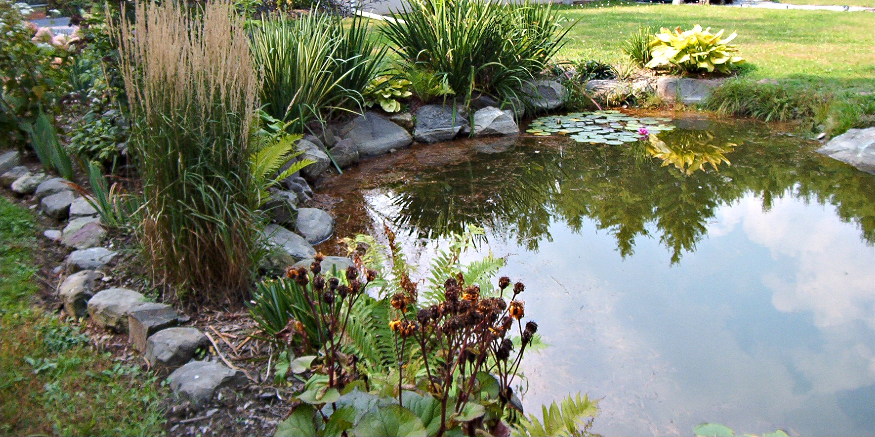 My Crazy Pond Project Part One – The Beginning