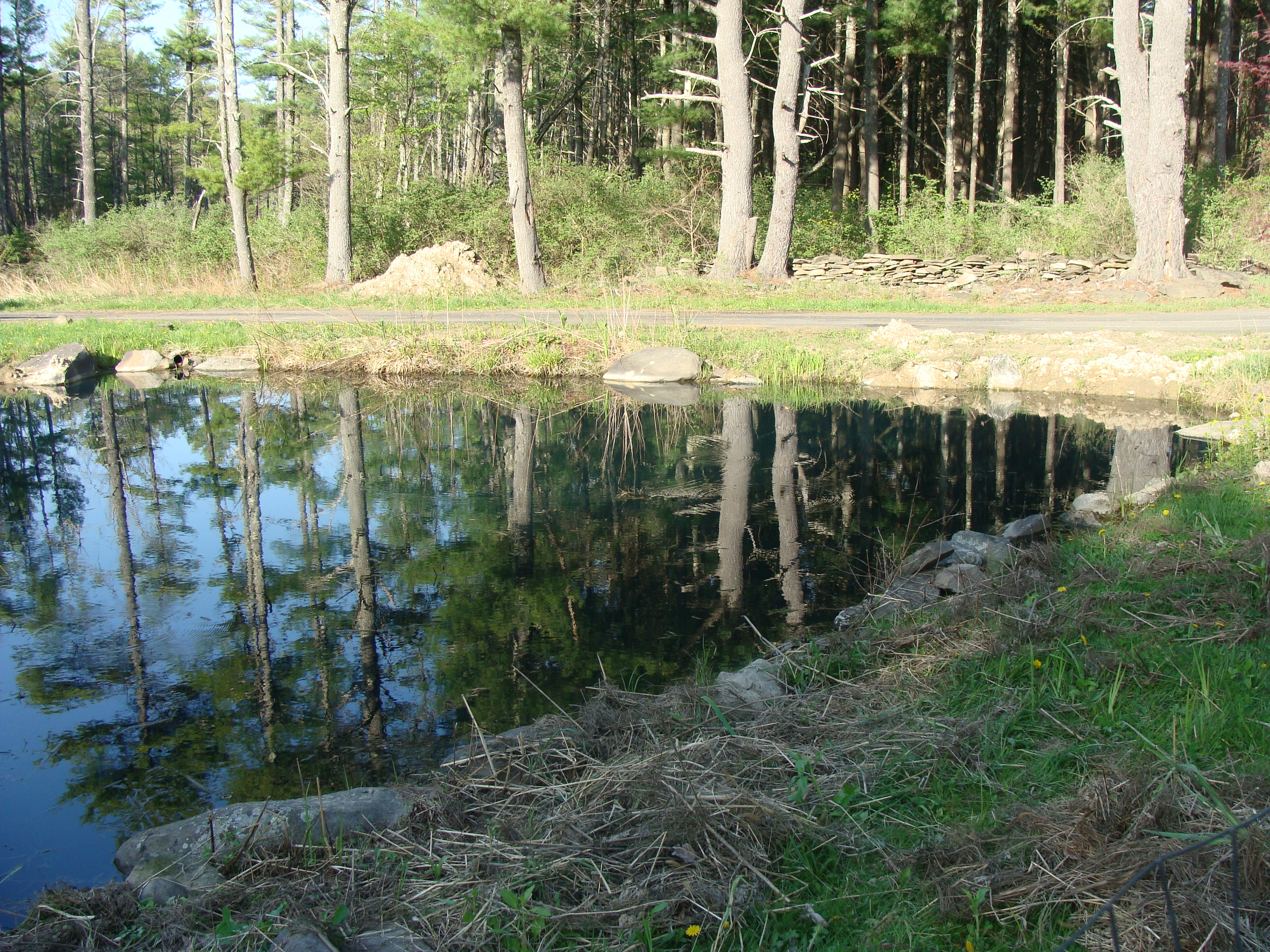 My Crazy Pond Project