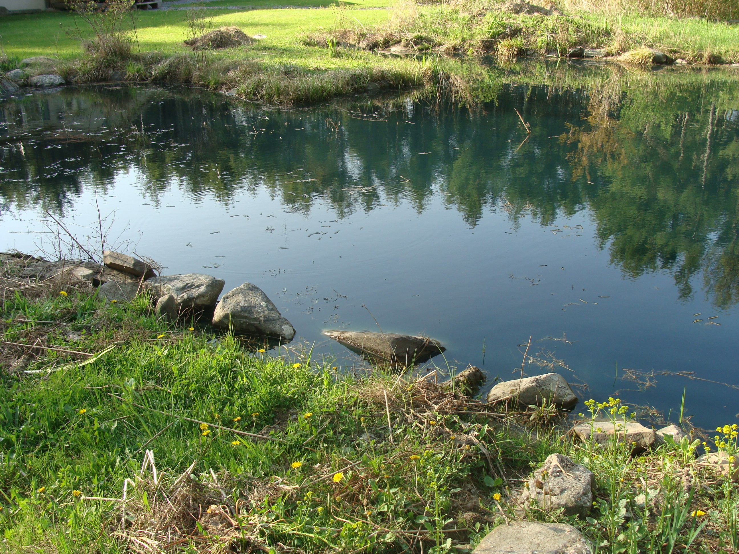 Pond After Dye Far Jeti View (1)